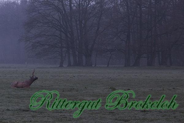 Rittergut Brokeloh 2019
